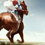 Google et nous, SEO, cheval course